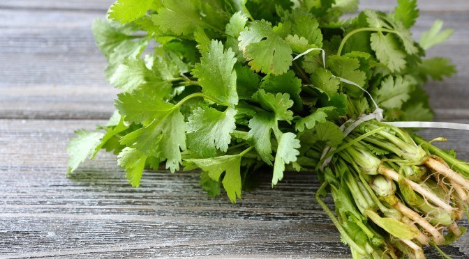 Cilantro may Chelate Heavy Metals from the Body, Studies Find