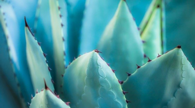 4 Reasons Why Agave is Not a Health Food