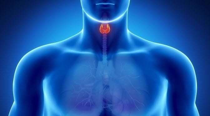 6 Toxins That Destroy Thyroid Health