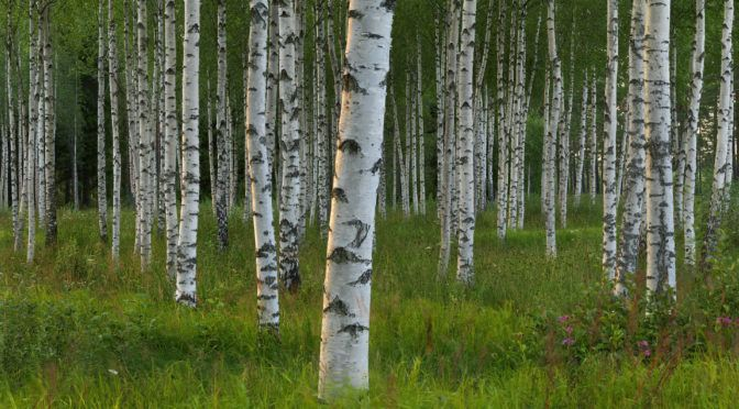 10 Survival Trees Everyone Should Plant On Their Property